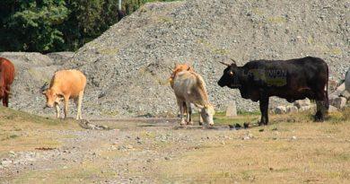 Aún hay oportunidad de apoyos ganaderos en Álamo