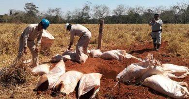 Aseguran dos tomas clandestinas de combustible en Acayucan