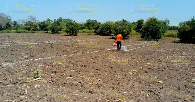 Buscan producir maíz de mejor calidad en Tihuatlán