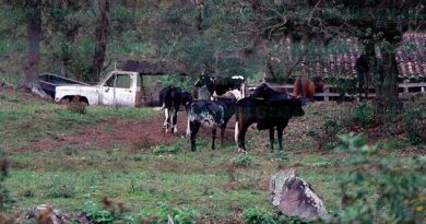 Construcción de autopista en Palma Sola agrava el estiaje y afecta a ganaderos