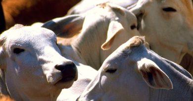 Ganaderos aplican medidas para mitigar la sequía