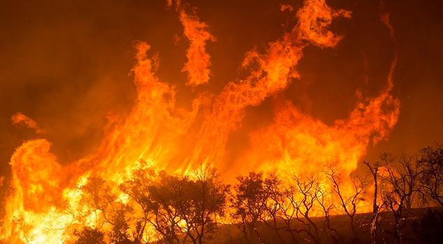 Incendio acaba con 200 hectáreas de manglar en Campeche