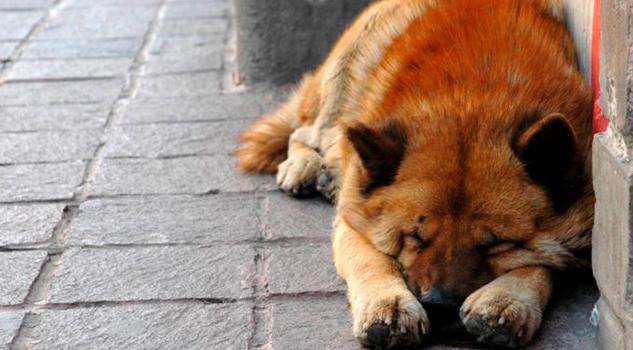 México, primer lugar en abandono de mascotas en Latinoamérica