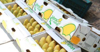 Mango veracruzano certificado como libre de Mosca de la Fruta