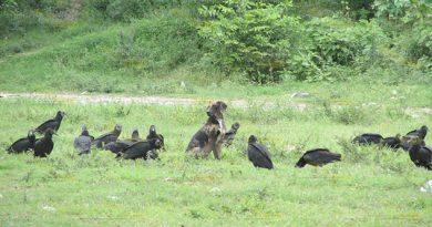 Peligran aves por deforestación en Álamo