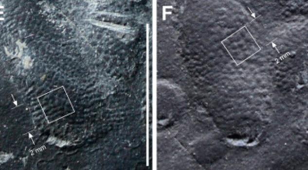 Piel de dinosaurio bien conservada es hallada en Corea