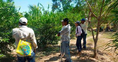 Previenen la incidencia de HLB y VTC en campo local de Tihuatlán