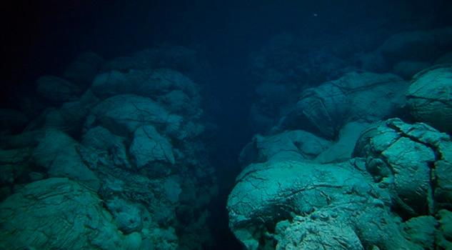 Qué pez vive en lo más profundo del mar