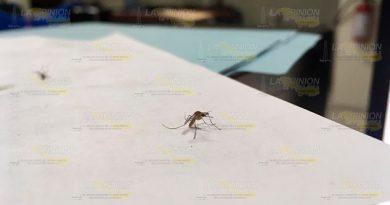 Quejas por invasión de mosquitos en Poza Rica, mal intencionadas: titular de SS