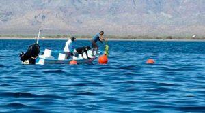 Rescatan a ballena frente a playa Nopoló en Baja California Sur