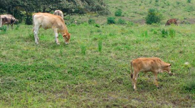 Se sienten los primeros estragos de la sequía en la Sierra de Otontepec