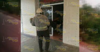 Abejas casi matan a anciano en Entabladero, apicultor lo rescata