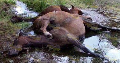 Encefalitis Equina mata a caballos en localidades de Coyutla