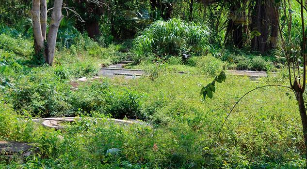 Grave contaminación por planta tratadora obsoleta en Tantima