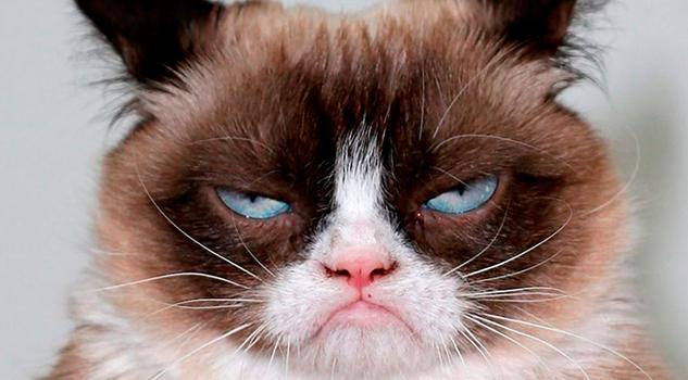 Grumpy Cat, la famosa gatita gruñona de internet, muere a los 7 años