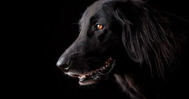 Los perros sonríen