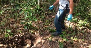 Sedema confirma muerte de monos en Minatitlán