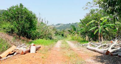 Sin freno la tala de árboles en Papantla