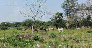 Urgen descentralizar a la Sader en la zona norte de Veracruz