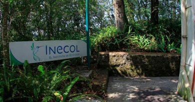Austeridad asfixia al Inecol no podrán pagar la luz ni mantenimiento a equipos