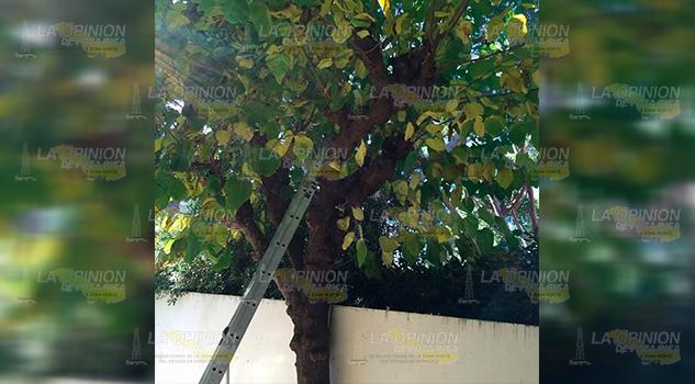 Cae de un árbol y se lesiona en la comunidad El Santiago