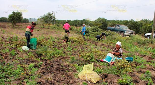 El coordinador del CAP en Veracruz, exige más recursos para el agro veracruzano
