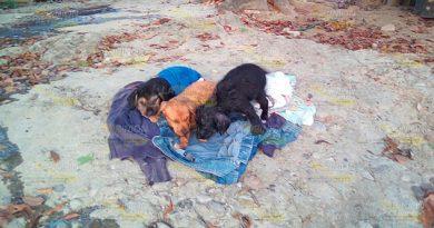 En aumento el maltrato y abandono de mascotas en Tuxpan