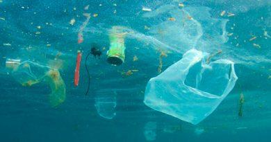 Plancton y plástico: Nuevo problema ambiental