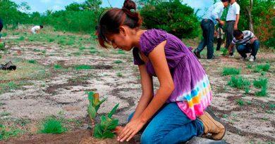 Prohíben reforestar sin permiso en Coatzacoalcos