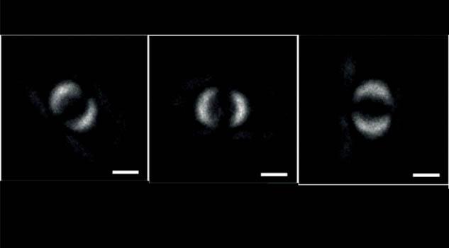 Capturan la primera imagen de entrelazamiento cuántico