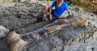 Hallan fémur del dinosaurio más grande que existió