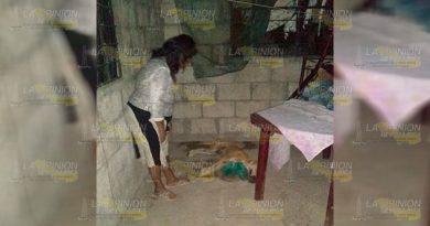 Matan a perro en la localidad Banderas de Tuxpan