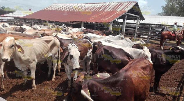 Molestia entre ganaderos de Tuxpan; renuncian al programa Crédito a la Palabra