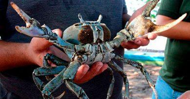 Por calentamiento global cae producción de cangrejo azul