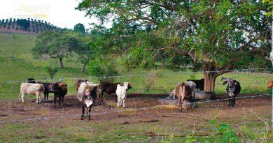 Ronda el derriengue en hatos ganaderos de la Zona Norte