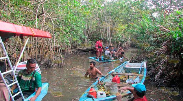 Ecologistas rescatan los manglares en Tecolutla