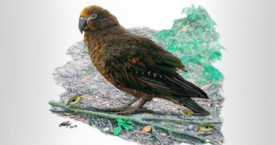 """""""Hércules con plumas"""": científicos hallan restos del loro más grande de la Tierra"""