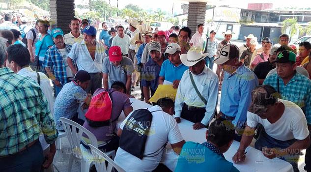 Asesoría técnica y mejores precios demandan citricultores en Tuxpan