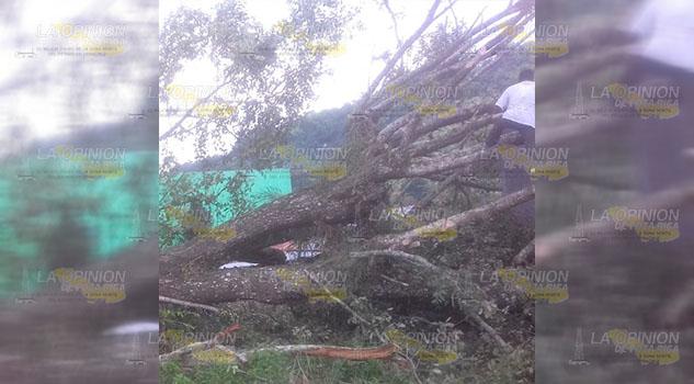 Cae árbol en una vivienda de la colonia Fernando López de Chicontepec
