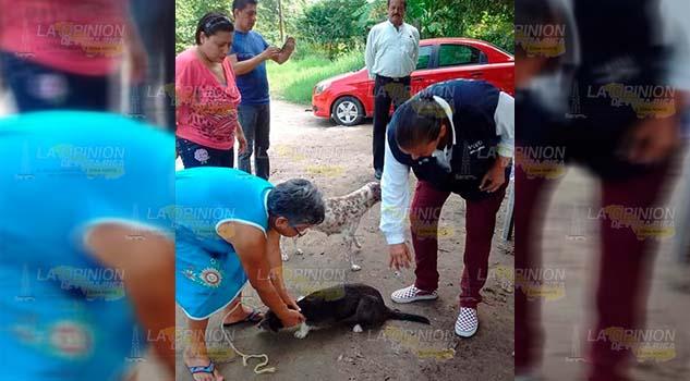 Llamado de activistas a esterilizar mascotas en Tuxpan