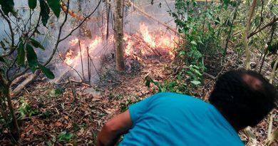 Por lograr recursos del programa Sembrando Vida, queman pastizales en Cazones
