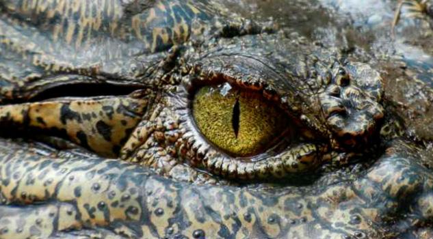 Niña le arranca los ojos a un cocodrilo que atacó a su amiga