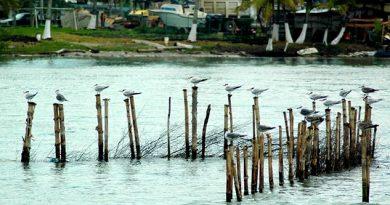 Pescadores reclaman que CFE repare daño en sistema Lagunar