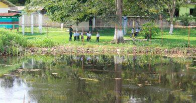 Renace el pantano y el riesgo de lagartos al lado de un kínder en Tuxpan