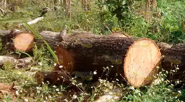 Talan árboles sin permisos en la zona Huasteca