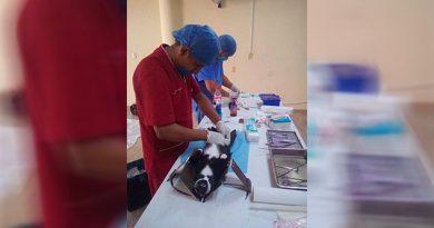 Van por el control de la sobrepoblación de mascotas en Tuxpan