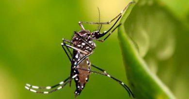 Veracruz suma 558 casos de dengue en una semana; van 6 mil 665 reportes